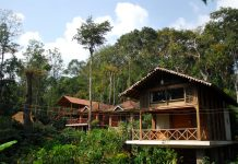 Tree houses in Coorg