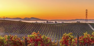 Napa Valley wine country mountain hillside vineyard at sunset