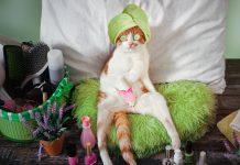 Funny cat festival