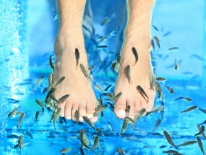 Fish Spa pedicure Rufa Garra treatment. Feet and fish in blue water. Woman feet.