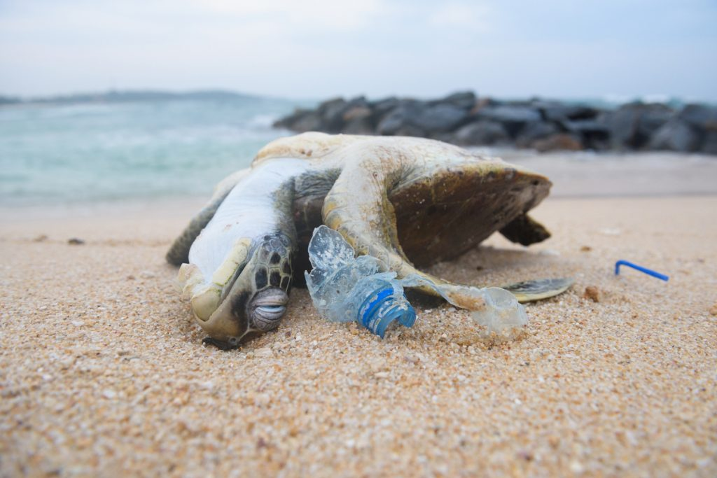 Dead turtle among plastic garbage from ocean on the beach, plastic pollution while travelling