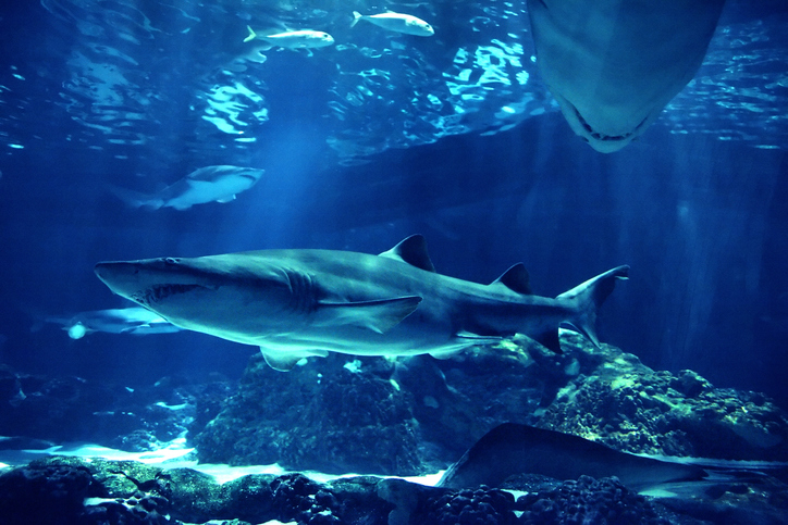 The shark exhibition at the New York Aquarium will have over 115 marine species