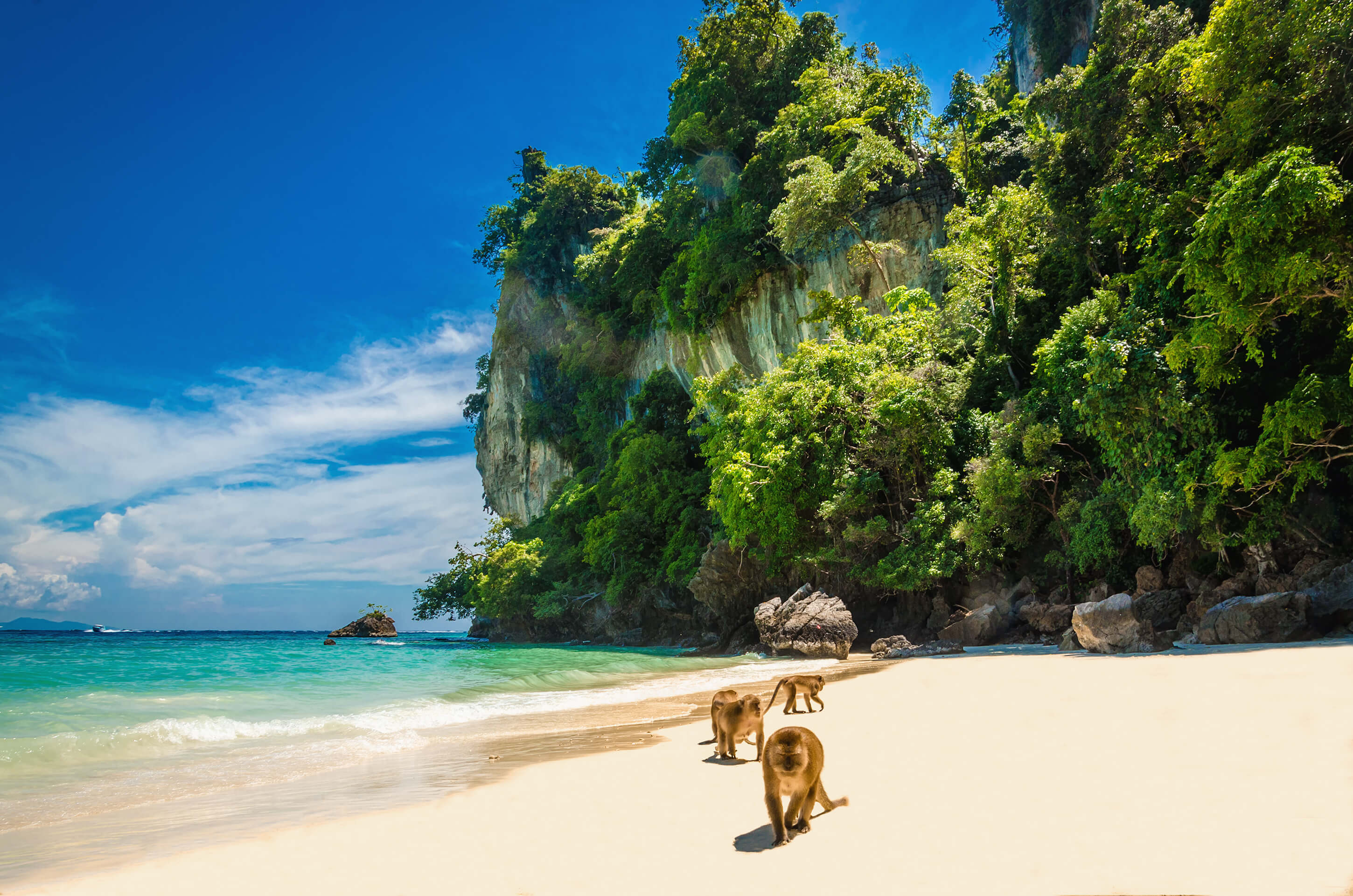 Monkeys in Phi Phi Island - top 7 islands in Thailand