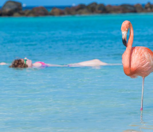 Woman floating and relaxing at Flamingo beach in Aruba