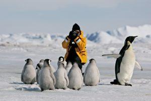 Antarctica Wildlife Penguins