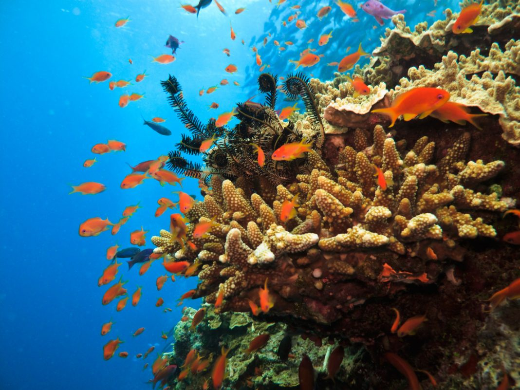 Great Barrier Reef Australia, Virtual Australia Experience