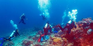 A group of divers surrounded by corals - diving in Bali