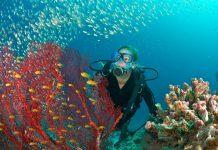 Scuba diver admires fish and red fan coral, Maldivas