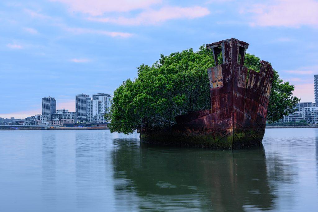 Abandoned places, 102 year old Shipwrecks of Homebush Bay in Sydney Australia .