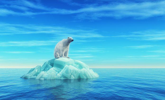 polar bear attacks, A polar bear sits on an iceberg in the middle of the ocean.
