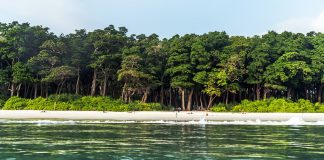 Stunning view of Radhanagar Beach on Havelock Island.