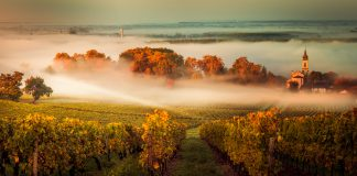 vineyards in france, Sunset in bordeaux wineyard France