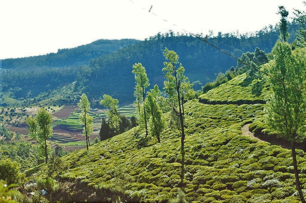 Coorg Coffee Plantation, Family Vacations