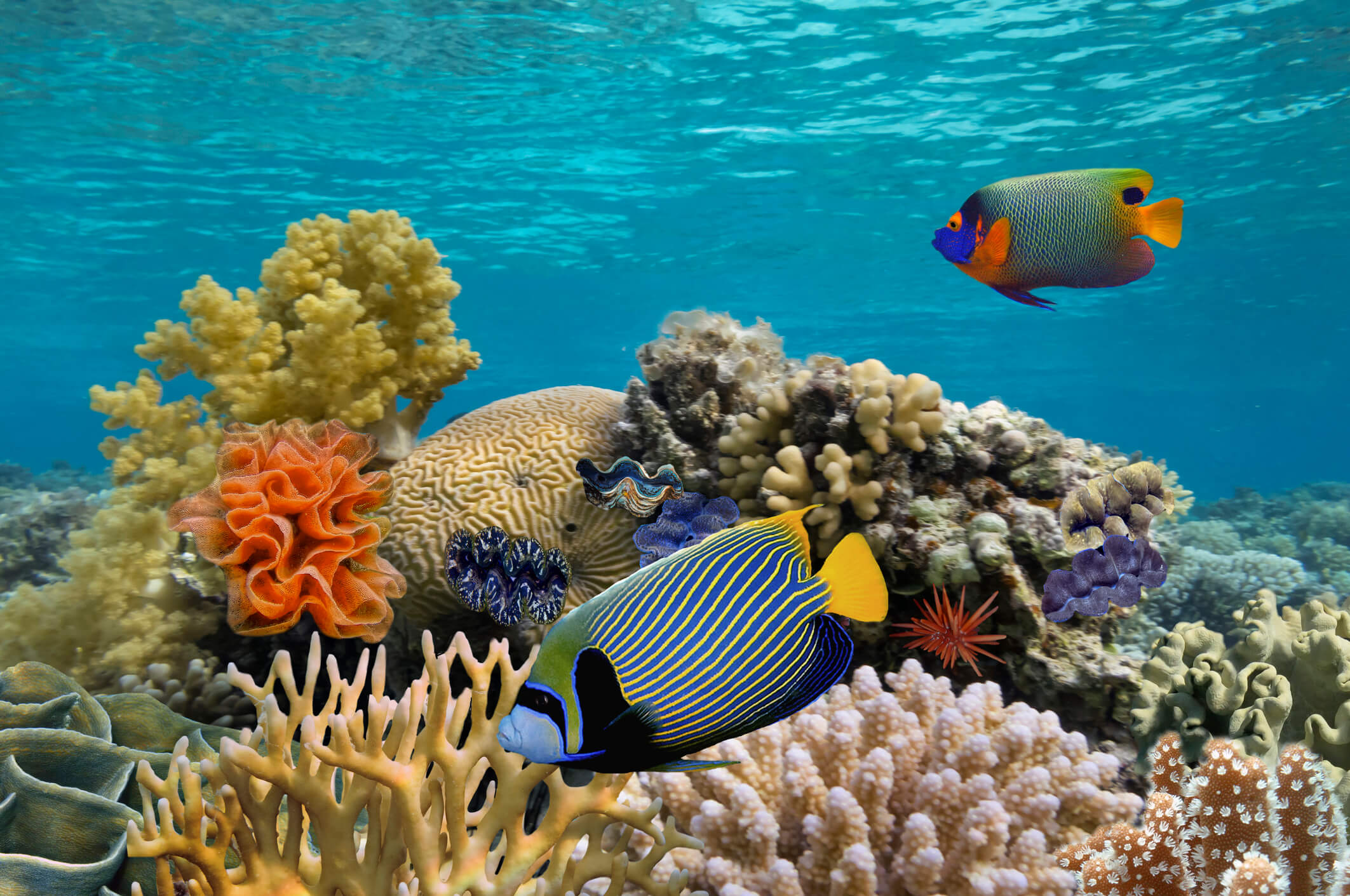 Colourful fish and corals in an aquarium - things to do in Kuala Lumpur