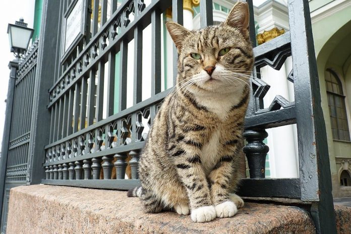 cats of the Hermitage Museum in St Petersburg, Cat Destinations