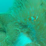 Sea walking at Tunku Abdul Rahman Park: Sabah's coral wonderland