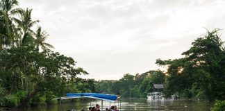 River cruise on the Kawa Kawa River - day trips from Kota Kinabalu