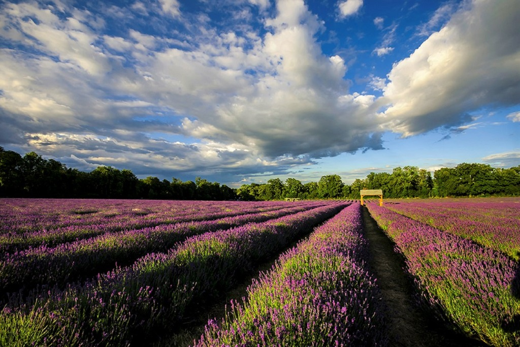 Lavender Fields Banstead Sutton