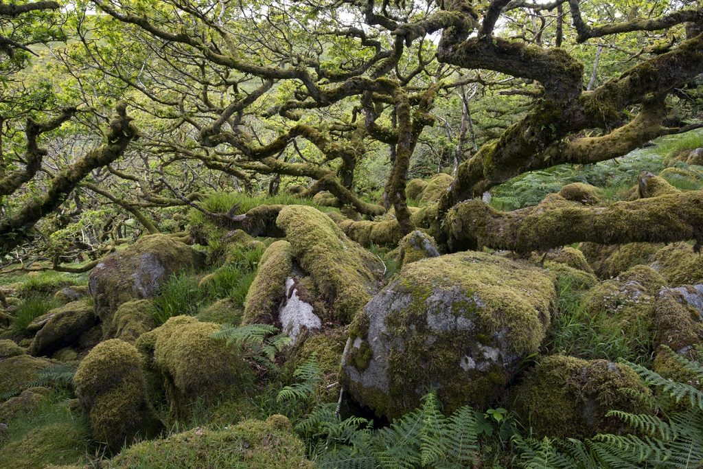 Wistman's Wood Dartmoor, most beautiful places in UK
