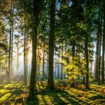Which are the most popular forests in the UK?