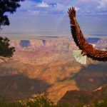 Is The USA The Best Country For Wildlife Travel?
