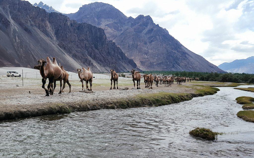 Nubra Valley Ladakh travel guide