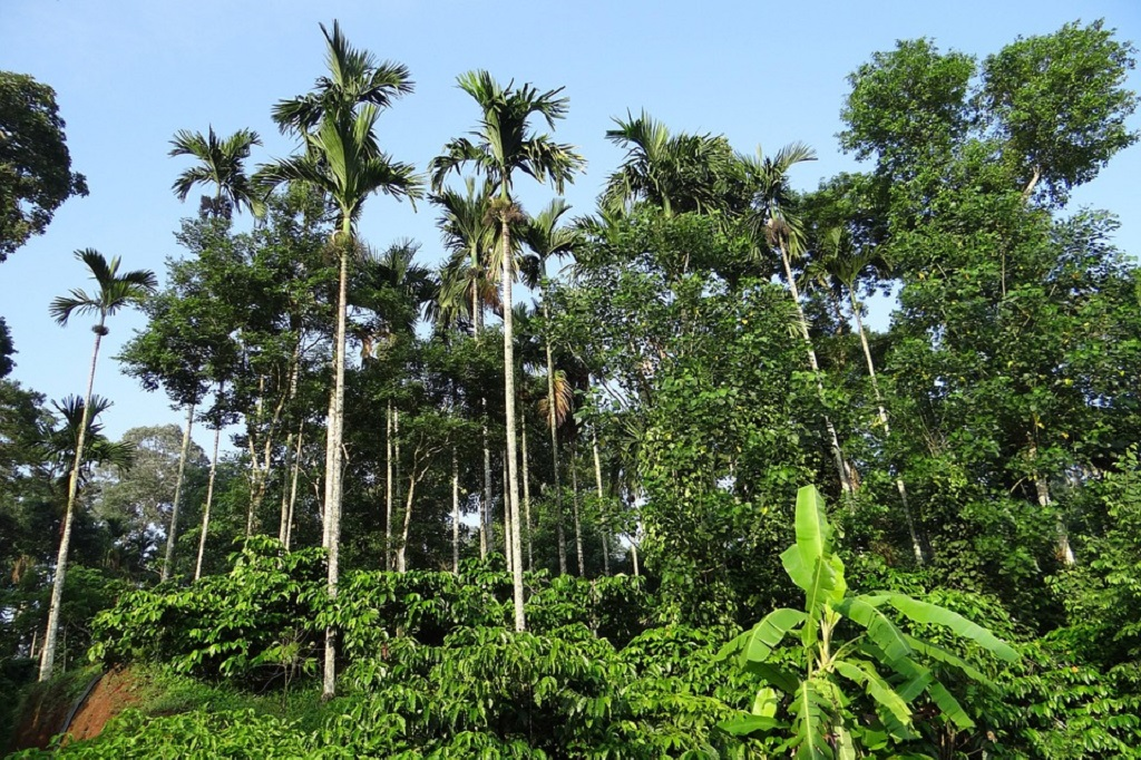 places for long drive in Bangalore,  Coorg, Karnataka
