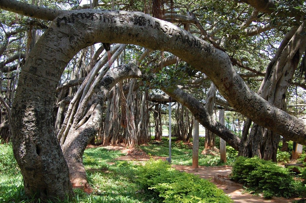 Big Banyan Tree at Bangalore is a great route for cyclists