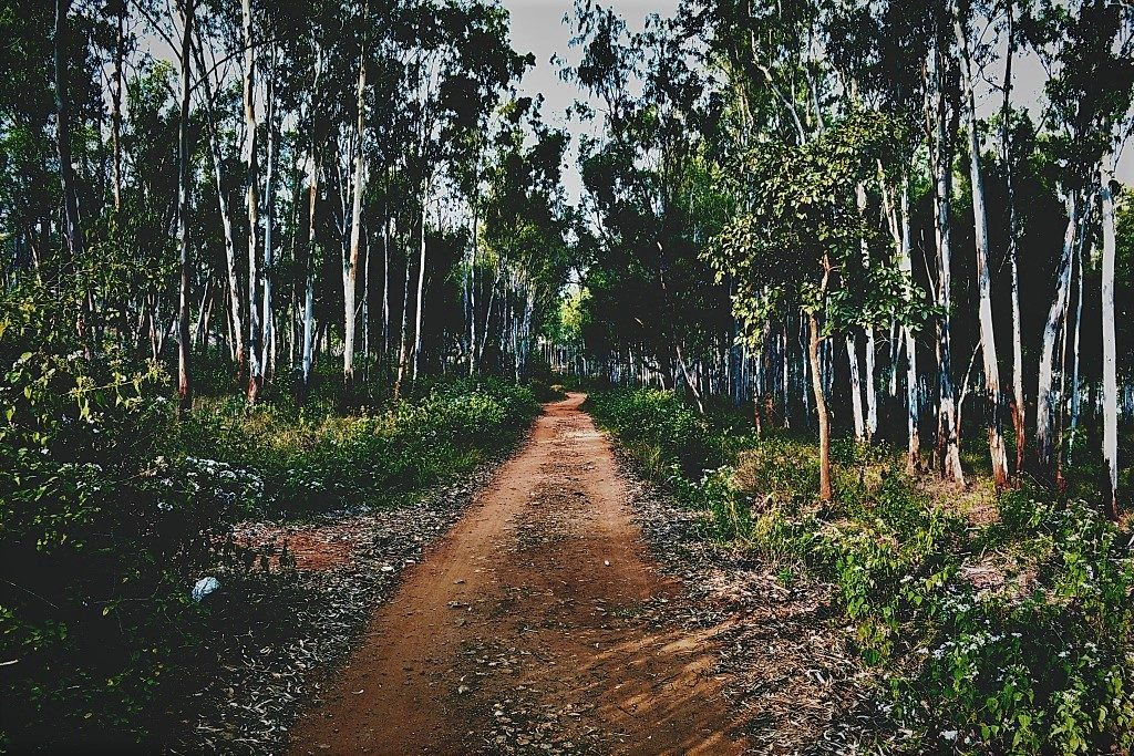 Turahalli Forest Path is one Bangalore's cycling trails