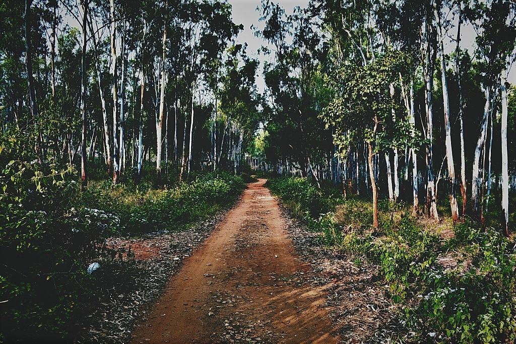 Turahalli Forest Path