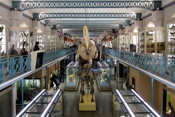 natural history museum lille