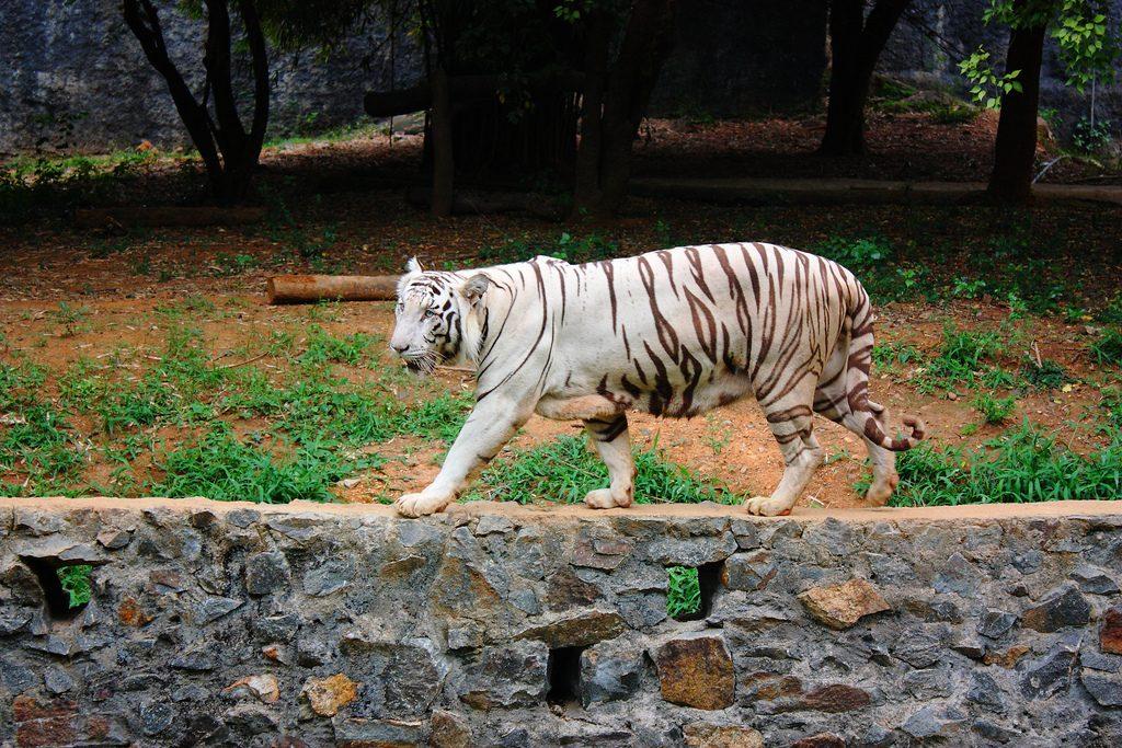 Vandalur-Zoo-Chennai