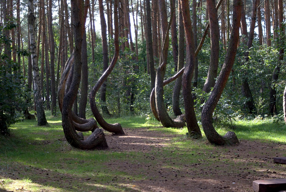 Interesting Fact Tree Krzywy Las Park Gryfino, Mysterious Destinations
