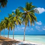 Places to Visit in Lakshadweep: A Guide to Explore These Gorgeous Islands