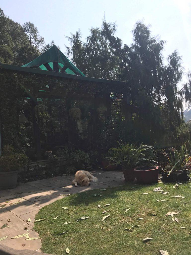 The Garden at Himalaica, Bhowali