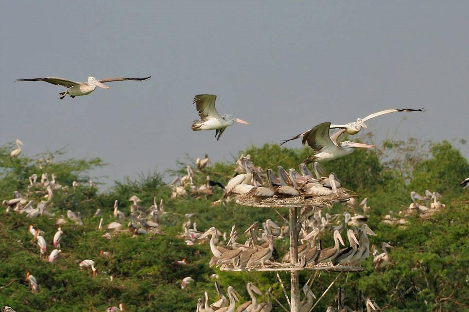 Guntur-Uppalapadu-Bird-Sanctuary