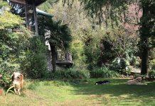 Front yard of the Himalaica, Bhowali