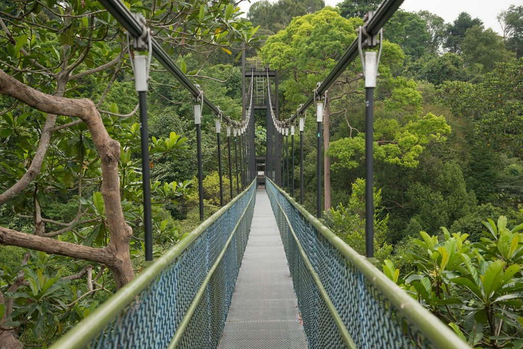 Long freestanding suspension bridge between the two highest points in the Central Catchment. Nature Reserve (MacRitchie) in Singapore.