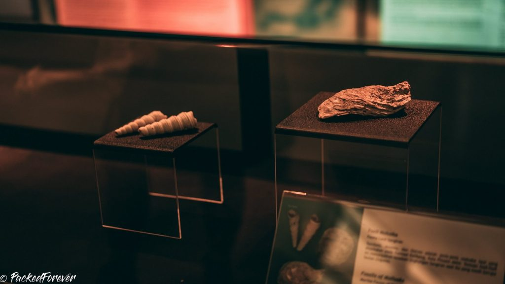 Jakarta Museum's prehistoric collection