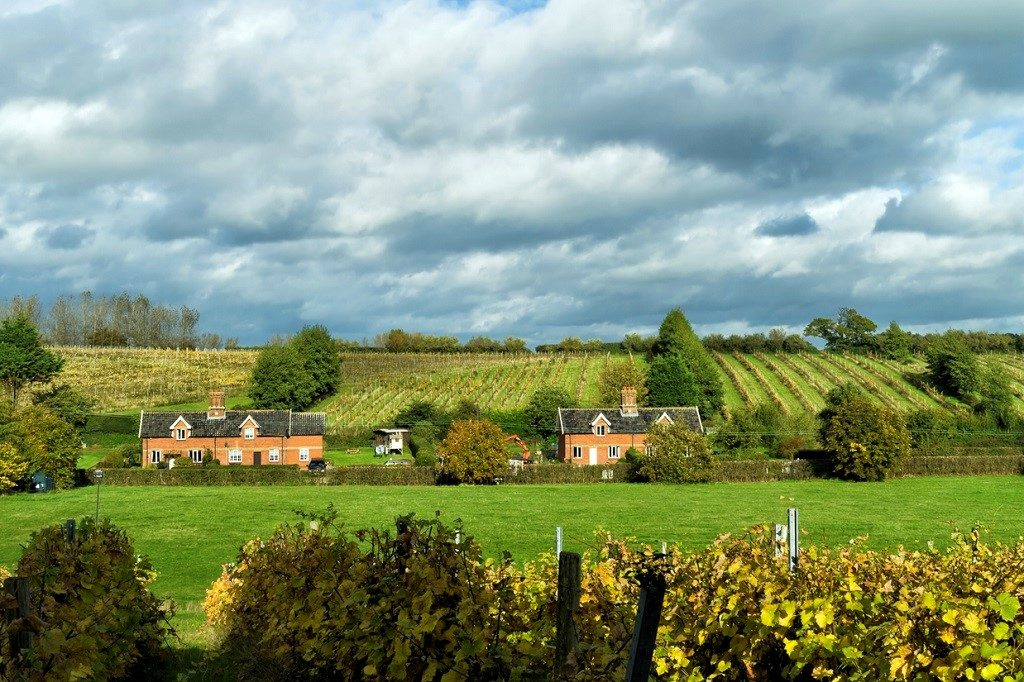 Vineyards and traditional cottages in the countryside near Shotley, in Suffolk, Eastern England, on a sunny autumn day.
