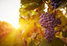 Best vineyards in India