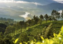 Munnar India places to visit in Kerala