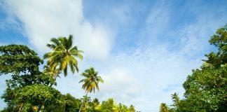 houseboat cruise through the backwaters, kerala tourism