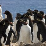 This Penguin Island is on Sale – Name your Price