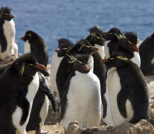 This Penguin Island is for Sale - Name your Price