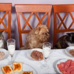 Best Pet Friendly Restaurants And Food Places In The World!