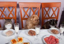 Two cats and a dog sit down at a banquet table - Pet friendly restaurants and food places