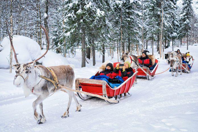 People in Reindeer sledge caravan safari in winter forest in Rovaniemi, Lapland, Finland