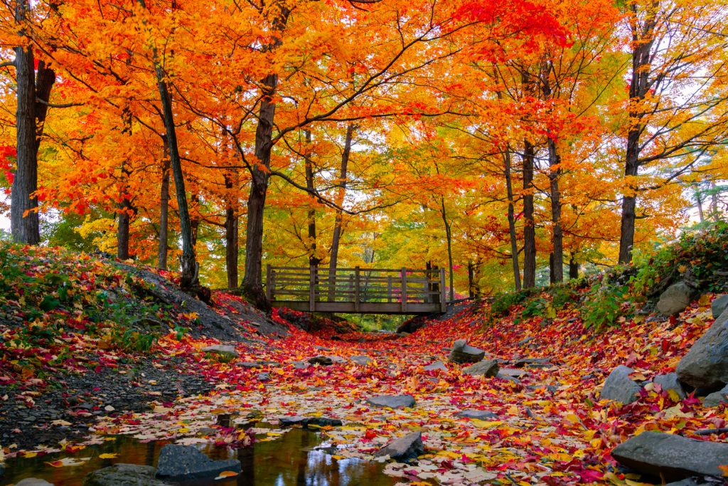 Beautiful fall foliage in New England, USA