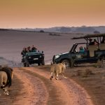 Why A Guided Safari Is A MUST In South Africa